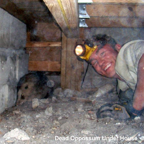 Chicago Extermination Company Il Animals Wildlife